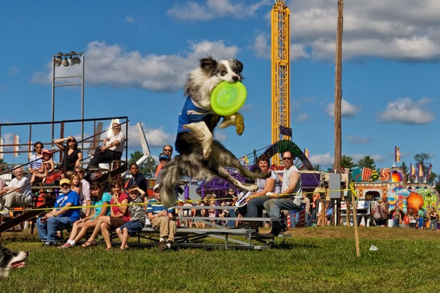 boston_party_entertainment_variety_performers_High Flying Frisbee Dogs._1
